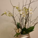 Orchidee-weiss-5